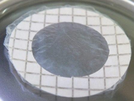 iPS角膜シート